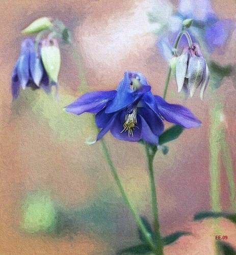 Akvarell Fantasy Flowers (Aquarelle & Aquarelle Pencil Work) Thanks To Pia Rousku Hellgren  For Learning!!!